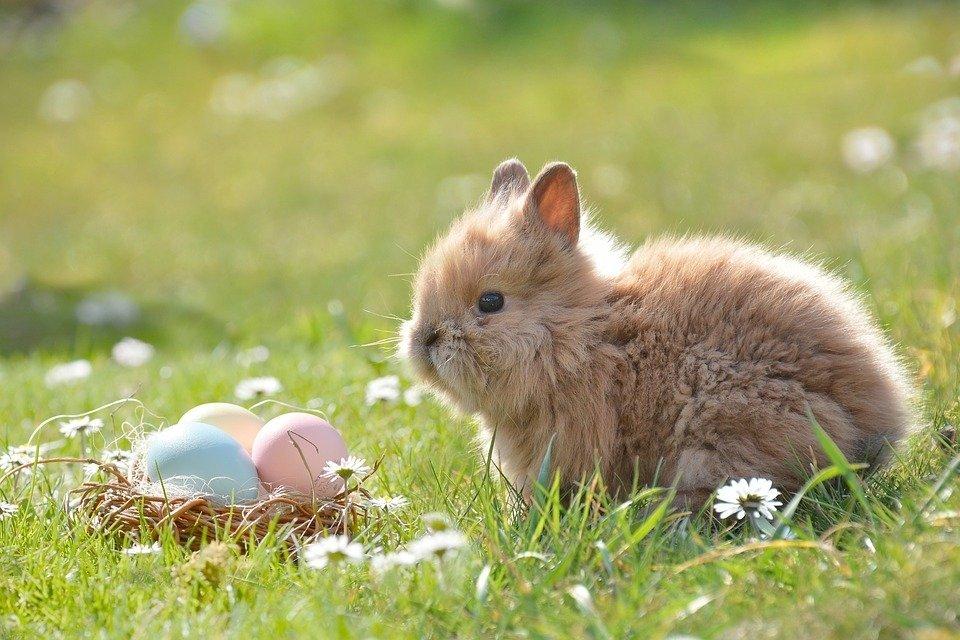 Velikonočný králiček